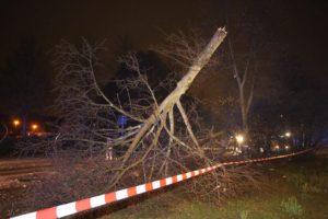 17796512 1450815321648854 2718724529695261625 n 300x200 - Drei Schwerverletzte nach Verfolgungsjagd mit Polizei - Auto fällt Baum